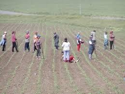 Amenzi foarte mari pentru cei care se deplasează la țară, pentru a-și lucra grădina sau livada