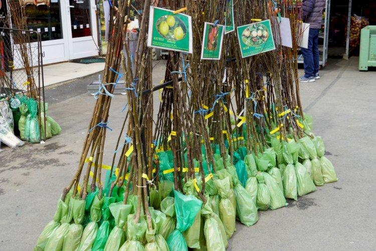După ce s-au făcut nectarine la Negrilești și mandarine la Jelna, oamenii vor să planteze copaci exotici